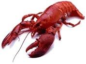 Lobster #1