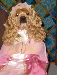 Buffy in halloween princess costume 31 Oct. 2008 amongst Heidi's quilts